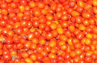 """Blog Faunus Plant - 3 Alimente """"obligatorii"""" pentru cine suferă de varice"""